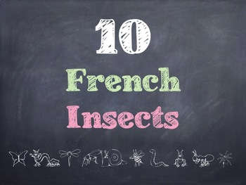 10 Common French Insects PowerPoint