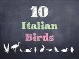 10 Common Italian Birds PowerPoint
