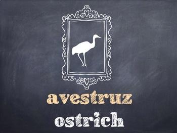 10 Common Portuguese Birds PowerPoint