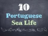 10 Common Portuguese Sea Life PowerPoint