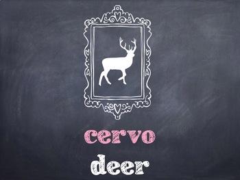 10 Common Portuguese Wildlife Animals PowerPoint