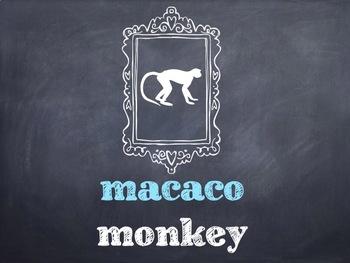 10 Common Portuguese Zoo Animals PowerPoint