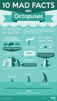 10 Mad Facts About Octopuses