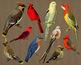 10 Vintage Birds Clip Art | Antique Animal | Bluebird, Cardinal | PNG, AI, EPS