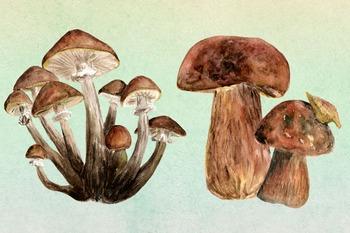10 Watercolor Mushroom Set + 3 Bonus