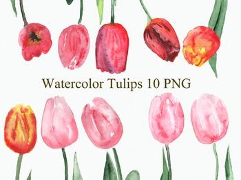 10 Watercolor Tulips Clip Art