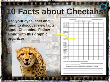 CHEETAHS: 10 facts. Fun, visual, engaging PPT (w links & free graphic organizer)