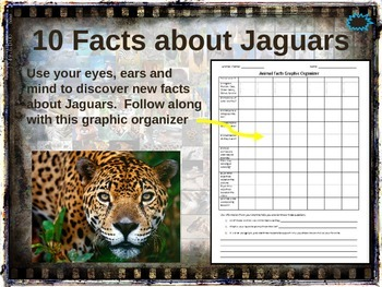 JAGUARS   10 Facts. Fun, Visual, Engaging PPT (w Links U0026 Free Graphic  Organizer)
