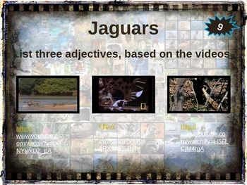 JAGUARS - 10 facts. Fun, visual, engaging PPT (w links & free graphic organizer)
