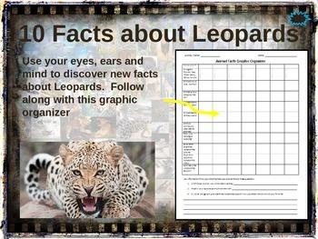 LEOPARDS: 10 facts. Fun, visual, engaging PPT (w links & free graphic organizer)