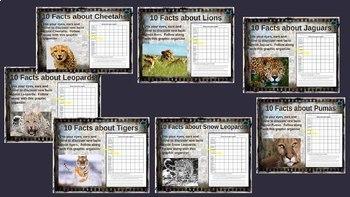 LION-TIGER-PUMA-JAGUAR-LEOPARD-SNOW LEOPARD-CHEETAH: 10 facts each, 7-PPT bundle