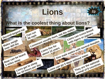LIONS - 10 facts. Fun, visual, engaging PPT (w links & free graphic organizer)