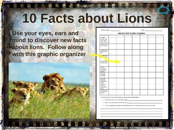 LIONS - 10 facts. Fun, visual, engaging PPT (w links & fre