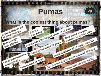 PUMA (COUGAR) - 10 facts. Fun, engaging PPT (w links & free graphic organizer)