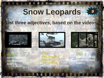 SNOW LEOPARDS - 10 facts. Fun, engaging PPT (w links & free graphic organizer)