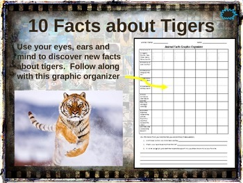 TIGERS - 10 facts. Fun, visual, engaging PPT (w links & free graphic organizer)
