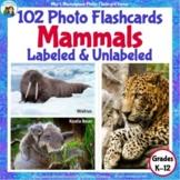 100 Animal Photo Flashcards: Mammals