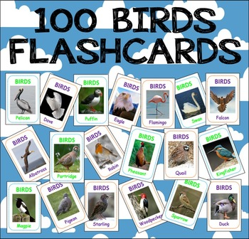 100 BIRDS FLASHCARDS SCIENCE DISPLAY TEACHING RESOURCE EARLY YEARS KS1 KS2