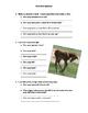 100+ Horse Math Questions