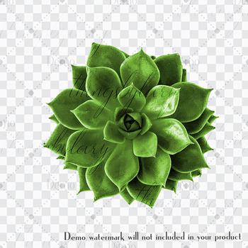 100 Real Vivid Succulent Clip Arts Botanical Kit Garden