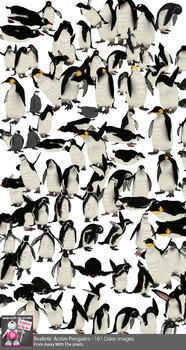101 Realistic Penguin Clip Art Images, Penguins In Different Action Poses