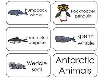 11 Antarctic Animals Beginning Stages Flashcards. Preschool-1st Grade