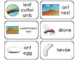 11 Ants Printable Flashcards. Preschool-3rd Grade