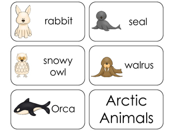 11 Arctic Animals Beginning Stages Flashcards. Preschool-1st Grade