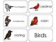 11 Birds Beginning Stages Flashcards. Preschool-1st Grade