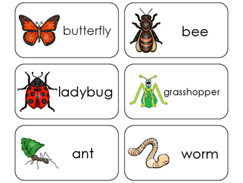 11 Bugs and Insects Beginning Stages Flashcards. Preschool-1st Grade