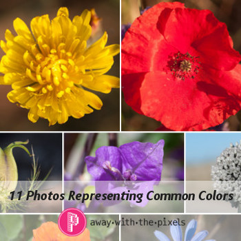 Photos of Flowers Demonstrating 11 Colors - Photos for Teachers