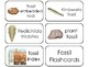 11 Fossils Printable Flashcards. Preschool-3rd Grade