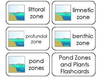 11 Pond Zones and Plants Printable Flashcards. Preschool-3rd Grade