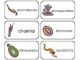 11 Prehistoric Cambrian Early Life Printable Flashcards. Preschool-3rd Grade