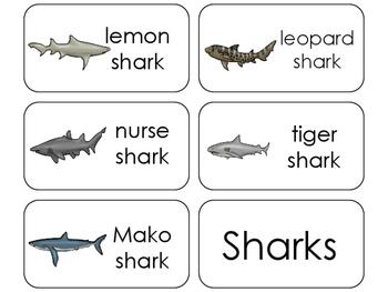 11 Sharks Beginning Stages Flashcards. Preschool-1st Grade
