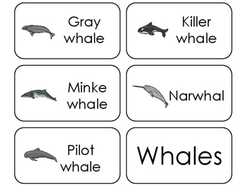 11 Whales Beginning Stages Flashcards. Preschool-1st Grade