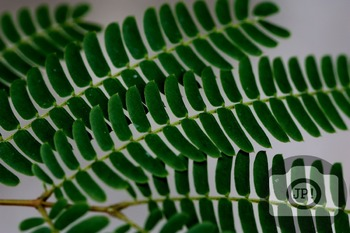 117 - TEXTURES - leaf [By Just Photos!]