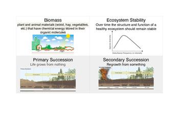 11D Vocabulary Flash Cards (Ecology)