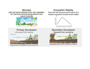 11D Vocabulary Flash Cards (Ecology)