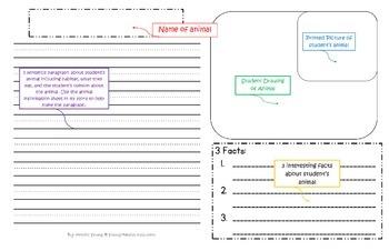 11x17 Report Paper