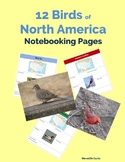 12 Birds of  North America Notebooking Pages