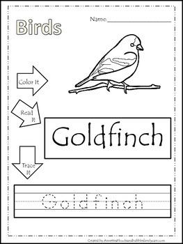 12 Bird themed printable preschool worksheets.  Color, Read, Trace wor