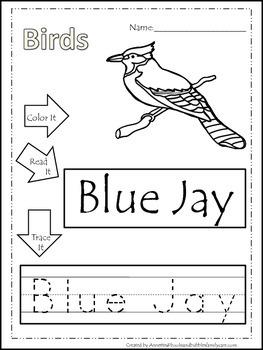 12 Bird themed printable preschool worksheets.  Color, Rea