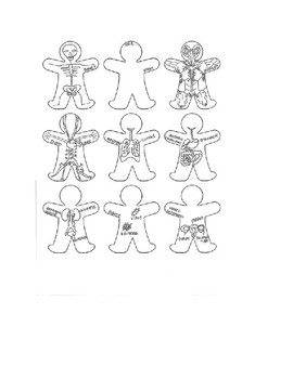 9 Body System (Gingerbread Men)