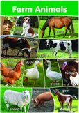12 Farm Animals Poster- A3 size - English Version.