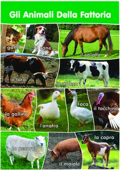 12 Farm Animals Poster- A3 size - Italian Version.