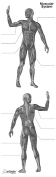 12 Poster Pack - 6 Skeletal and 6 Muscular System Body Posters for PE and Health