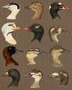 12 Vintage Duck Faces Clip Art | Antique Waterfowl Bird Heads | PNG, AI, EPS