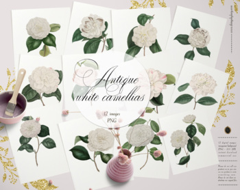 12 Vintage White Camellias Ephemera Transparent Images PNG