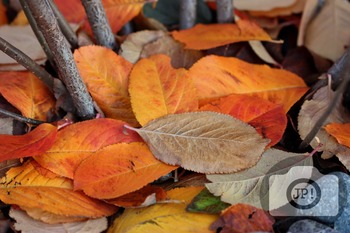 121 - NATURE - leaves  [By Just Photos!]